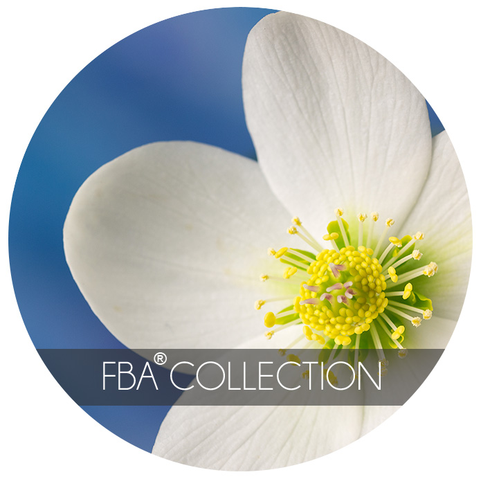 FBA® Collection